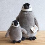 ケーセン 皇帝ペンギンの子