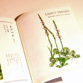 kodomoto-book